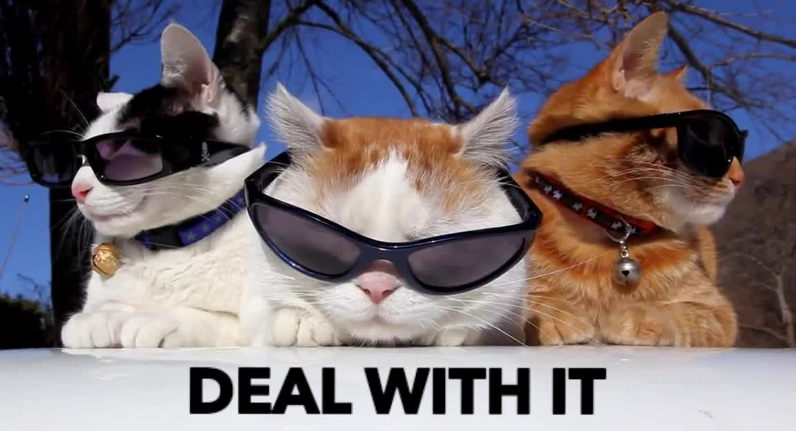GIF Brewery, cat, cats, cool, deal, deal with it, epic, funny, it, sunglasses, with, Funny cats - Deal with it GIFs