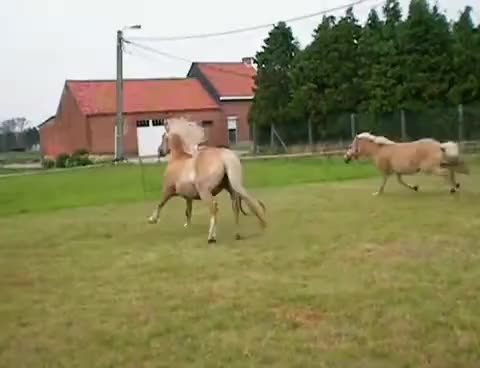 Watch horses GIF on Gfycat. Discover more horses GIFs on Gfycat