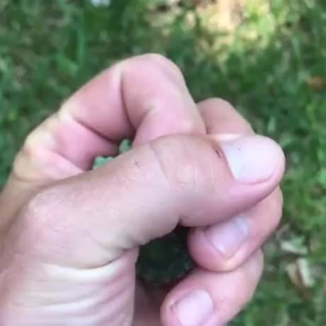 Watch and share Two Headed Turtle GIFs by Gif-vif.com on Gfycat