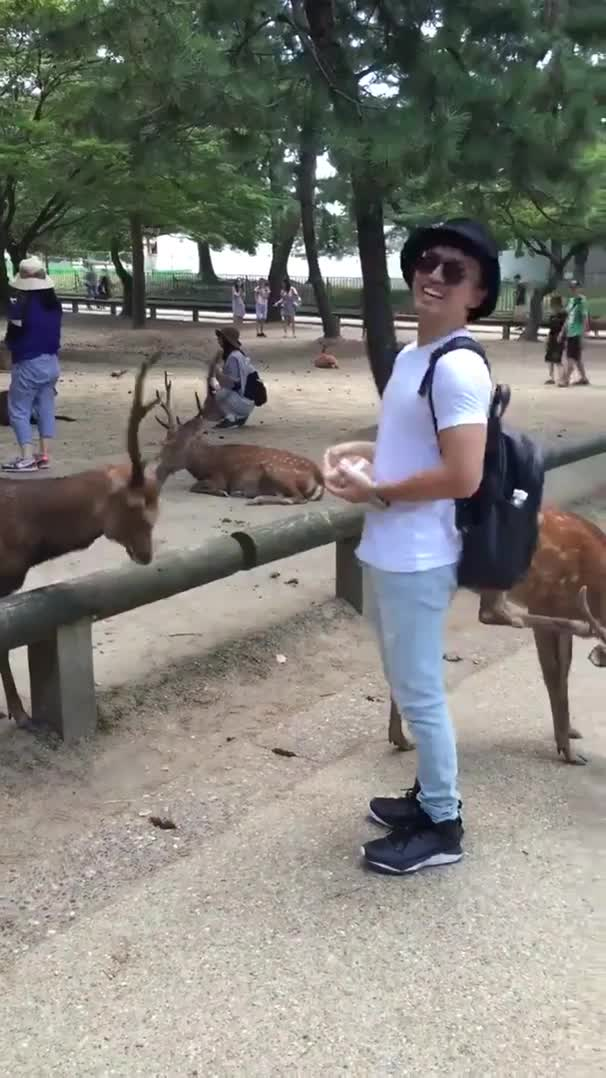 Polite deer bowing for a treat GIFs