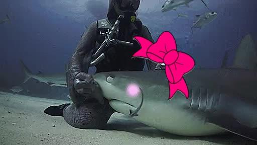Petting a mature shark : gifs GIFs