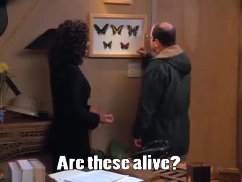 Watch this george costanza GIF on Gfycat. Discover more george costanza, georgegifs, jason alexander, seinfeld GIFs on Gfycat