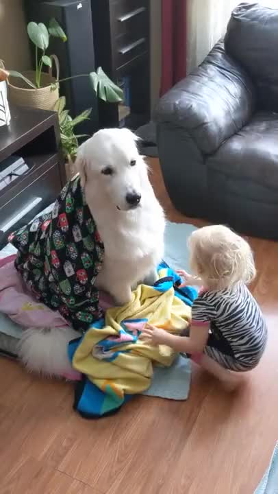 Watch and share Toddler-wraps-dog-with-blankets-while-they-sit-patiently-1167772 GIFs by rodrobong26 on Gfycat