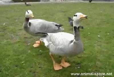 Watch and share Animals GIFs on Gfycat
