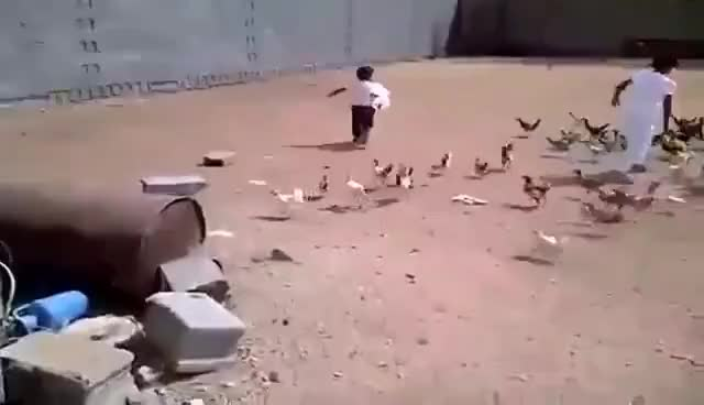 Watch and share Chickens GIFs and Chicken GIFs on Gfycat