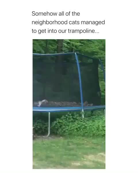 Watch and share Cat Trampoline GIFs by Boojibs on Gfycat