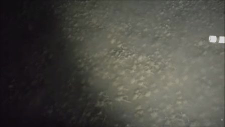 Watch crab swarm GIF by Popular Science (@popsci) on Gfycat. Discover more related GIFs on Gfycat