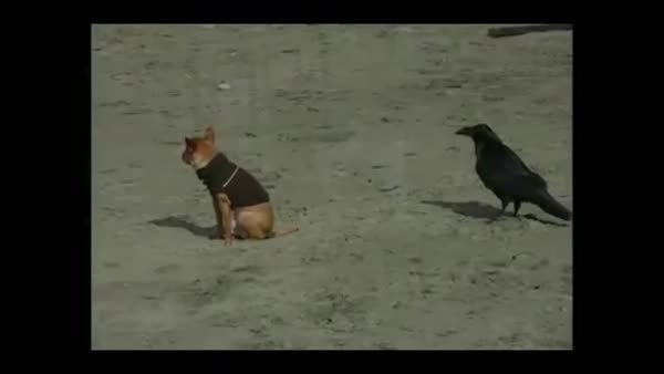 animalsbeingjerks, Wait, wait, attack! (reddit) GIFs