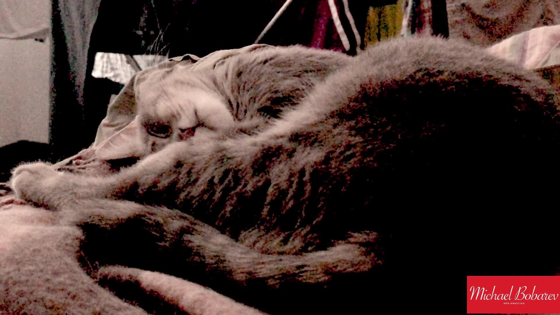 cat, cats, cute, likeus, sleep, sleepy, stress, stressful, Stressful sleep GIFs