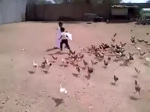 Watch and share [SO FUNNY] Little Boy Getting Chased By Hungry Chickens GIFs by jaggazz on Gfycat