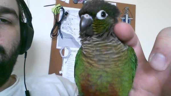 Bird yawn GIFs