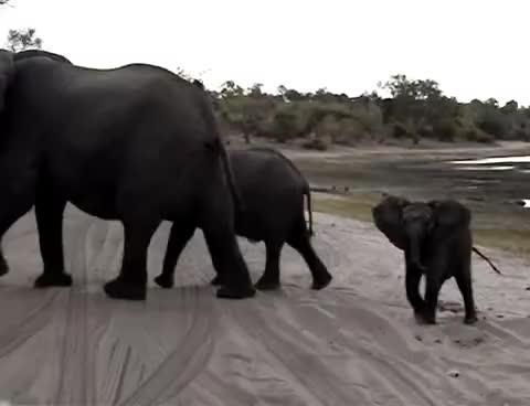 Sneezing, elephant, Sneezing elephant GIFs