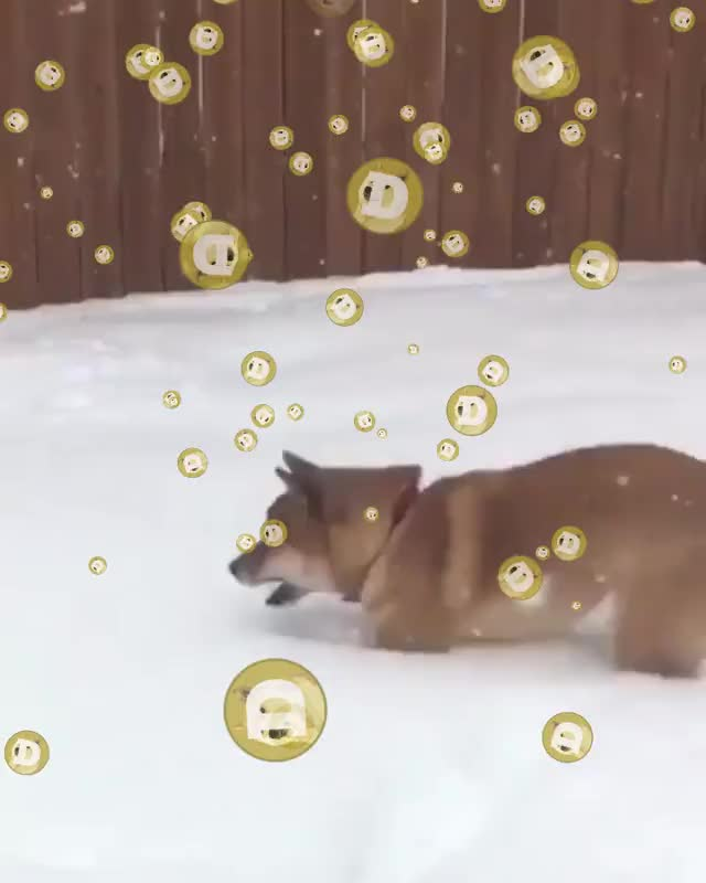 Watch and share Dogecoin GIFs and Yotd GIFs by DS on Gfycat
