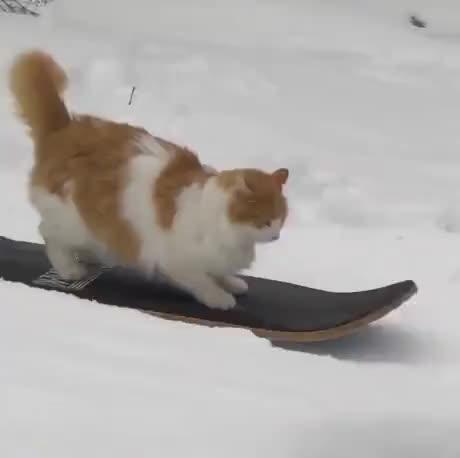 Kitty snowskating