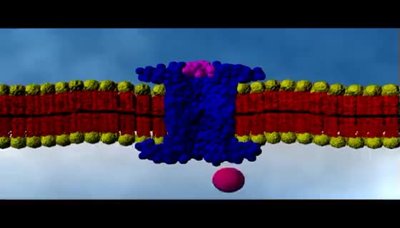 Watch Cell Membrane Passive Transport | Cell Biology GIF on Gfycat. Discover more related GIFs on Gfycat