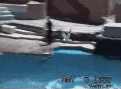 Watch Uppercut GIF on Gfycat. Discover more related GIFs on Gfycat