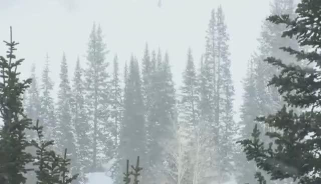 Watch and share Snowfall GIFs on Gfycat
