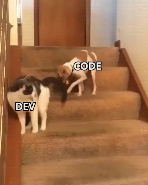 Watch and share DEV GIFs on Gfycat