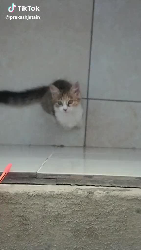 Watch  #slowmo #Kenya #cat #pets GIF by TikTok (@thosereallyfunny) on Gfycat. Discover more Kenya, cat, pets, slowmo GIFs on Gfycat