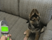 ResentfulAnimals, resentfulanimals, CheekyDogTalkingToPhone GIFs