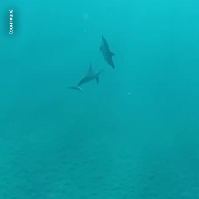 Watch and share 10/10 For The Dive! 🐬👏 GIFs by GIFs For Everything on Gfycat
