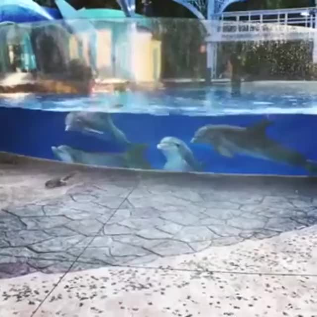 Watch and share Dolphins Fascinated By Two Squirrels GIFs by teistom on Gfycat