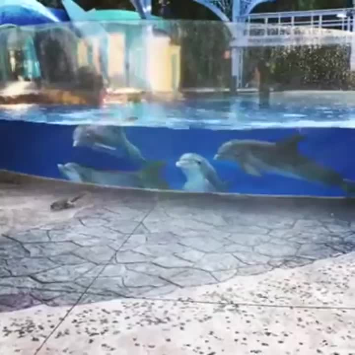 Dolphins fascinated by two squirrels GIFs