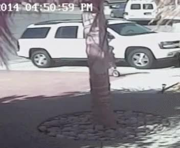 Watch and share Family Cat Saves Boy From Dog Attack GIFs on Gfycat