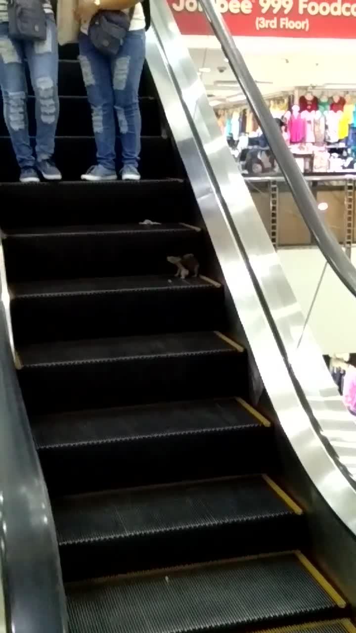 viralhog, Rats on Escalator || ViralHog GIFs