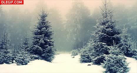 Watch and share GIF: Nieve Cayendo En El Bosque GIFs on Gfycat