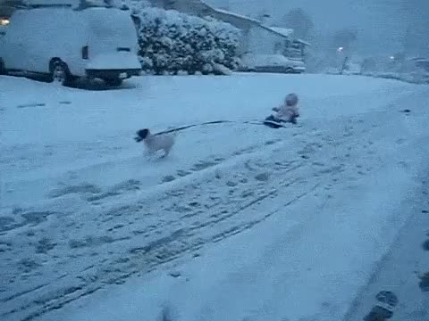 Watch and share Dog Pulling Baby On Sled GIFs on Gfycat