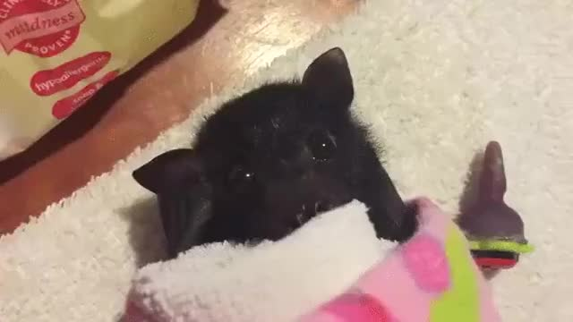 Watch and share Bat GIFs by likkaon on Gfycat