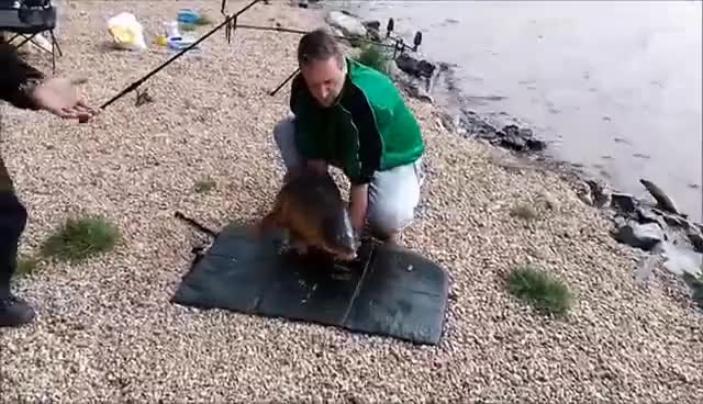 Watch and share Carp Escapes From Fisherman GIFs on Gfycat