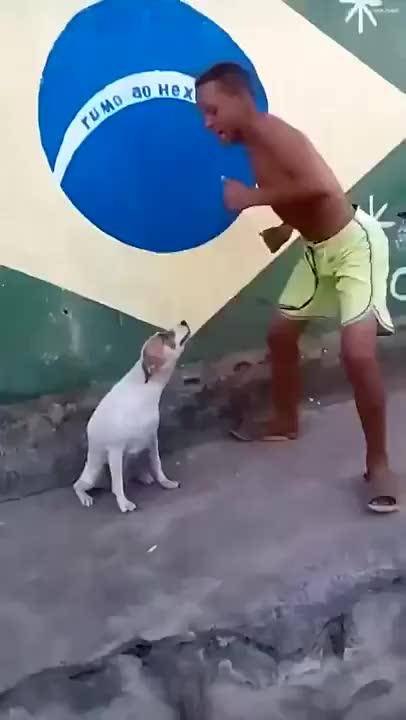 Watch Brazilian Dog Dancing GIF on Gfycat. Discover more Dog, brasil, brasile, brasilerio, brazil, dancing, guy, perro, street, twerking GIFs on Gfycat