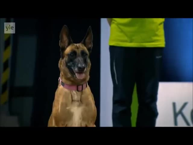 Watch Doggy discipline GIF by RespectMyAuthoriteh (@respectmyauth) on Gfycat. Discover more related GIFs on Gfycat