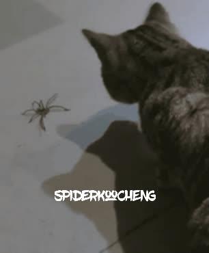 spiderkoocheng GIFs