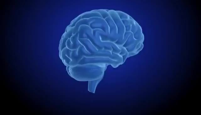 Watch and share The Limbic System, Methamphetamine (CNS Stimulant), And Addiction GIFs on Gfycat