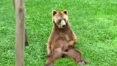 Watch and share Bear Scratching Balls GIFs on Gfycat