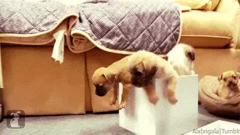 Watch That Scoop GIF on Gfycat. Discover more Cute Puppies, New Year, madness, party, party madness, reacting GIFs on Gfycat