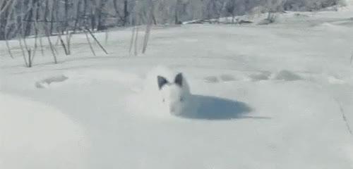 Rabbit runs across an avalanche