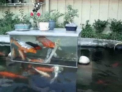 physicsgifs, woahdude, Upside down fish tank (reddit) GIFs