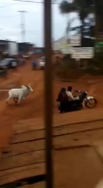 Watch and share Bull Rams Into A Two Wheeler GIFs on Gfycat