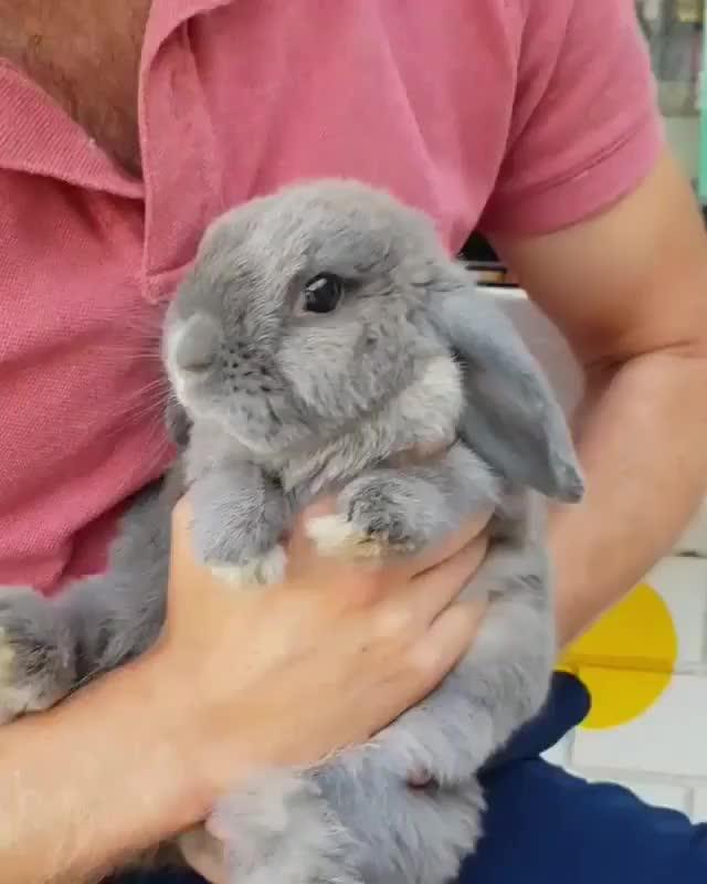 aww, awww, awwwww, bunny, kisses, rabbit, Bun kisses GIFs