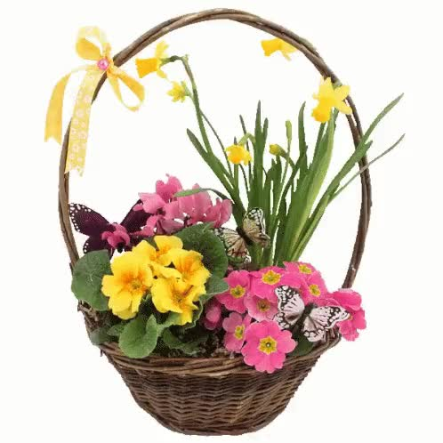 Watch and share Flowers Basket GIFs on Gfycat