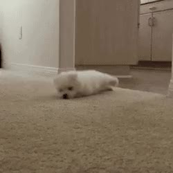 Watch and share Funny Animal Gifs - Part 241, Funny Gif, Animal Gif Picture GIFs on Gfycat