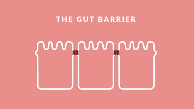 Watch and share Leaky Gut GIFs on Gfycat