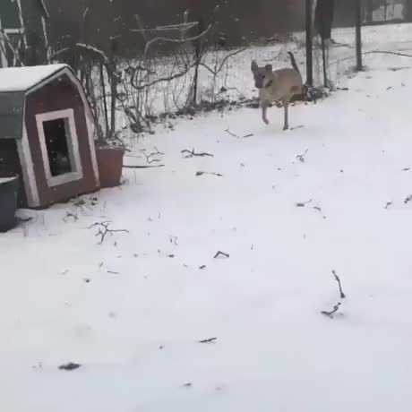 Watch and share Snow GIFs and Dog GIFs by esberat on Gfycat