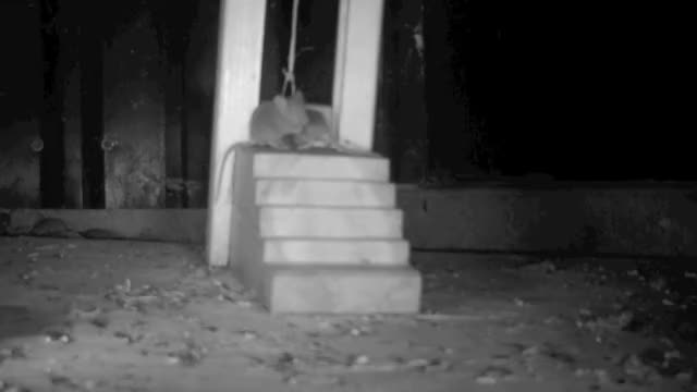 Watch MULTI KILL GIF by @hooshang on Gfycat. Discover more rat trap GIFs on Gfycat