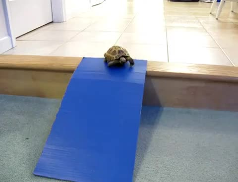 animals, slide, tortoise, turtle, Turtle slide GIFs