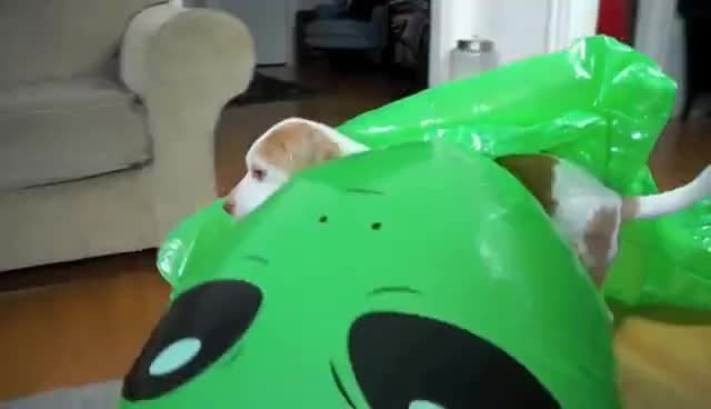 Dog Unfazed by Giant Alien: Funny Dog Maymo GIFs